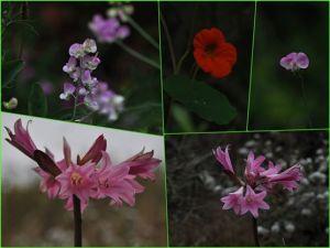 海角天涯沿途野花
