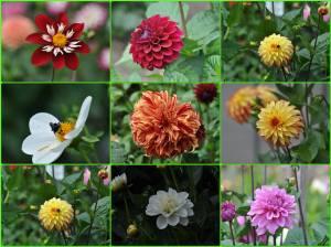 金門公園溫室花房的花朵